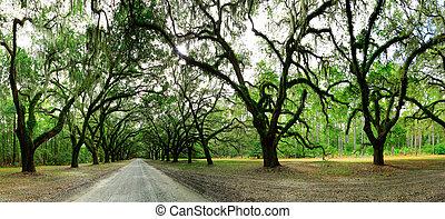 Viejos robles cubiertos de musgo. Forsyth Park, Savannah, Georgia