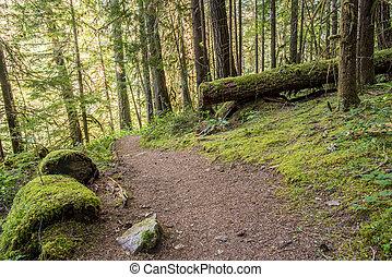 Vientos de trazo a través de bosques de oregon