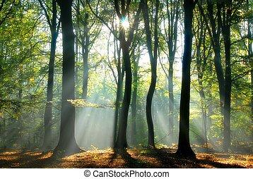 vigas, por, árboles, verter, luz