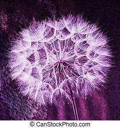 Vintage Pastel Background - vívida flor de diente de león abstracto
