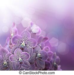 violeta, orquídeas