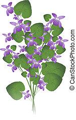 Violeta salvaje