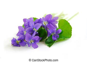 Violetas de fondo blanco