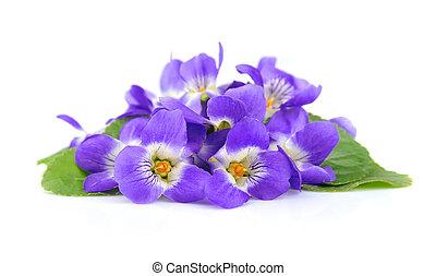 violetas, flores