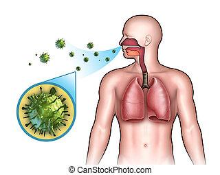 viral, infección