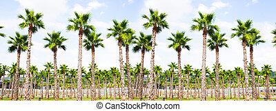 vista, cima árbol, palma
