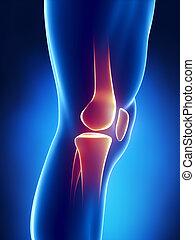 Vista detallada de la rodilla humana