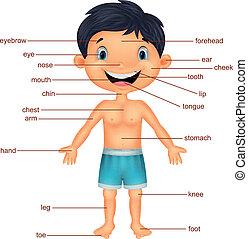 vocabulario de dibujos animados parte del cuerpo