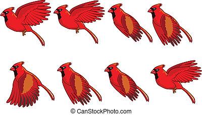 vuelo, animación, cardinal, pájaro