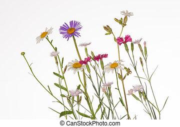 wildflowers, colorido