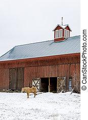 winter., caballo, granero