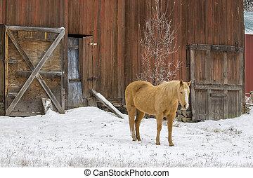 winter., estantes, caballo, granero