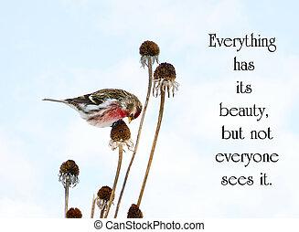 winter., sobre, comida, belleza, chino, naturaleza, margarita, redpoll, muerto, semillas, común, bastante, proverbio, perched, tallo, pájaro masculino