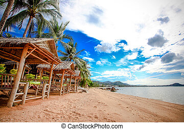 withh, árbol, palmas de mar, vista, samui, koh, hermoso