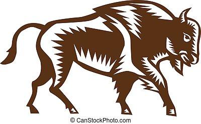 woodcut, bisonte, norteamericano