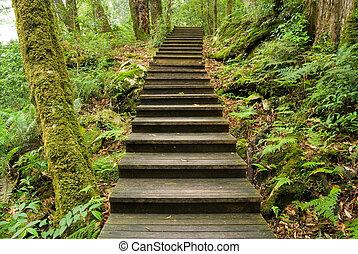 Wooden camina hacia el bosque
