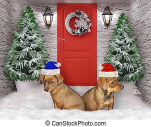 yarda, navidad, perritos, dos