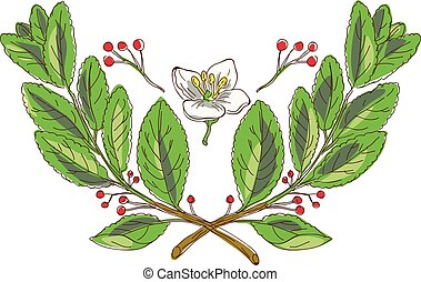 yerba-mate-plant-flower-wtc