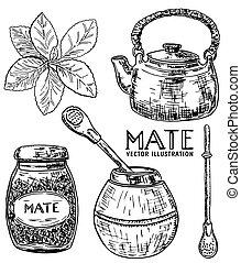 yerba, vector, estilo, mano, dibujado, tinta, conjunto, té, bosquejo, compañero