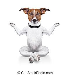 yoga, perro