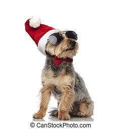 Yorkshire terrier llevando sombrero de Santa Claus, gafas de sol y corbata de moño