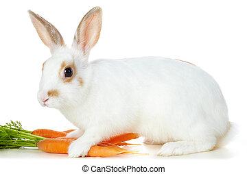 zanahorias, conejo