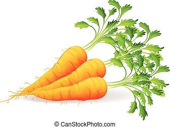 zanahorias, nutritivo