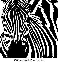 (, zebra, equus, zebra)