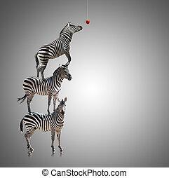 zebra, pila, manzana, comer, alcanzar