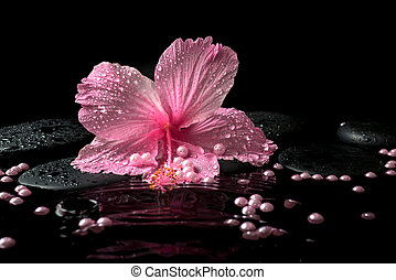 zen, hermoso, rosa, delicado, piedras, balneario, hibisco, ajuste