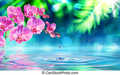 zen, orquídea, gotita, jardín