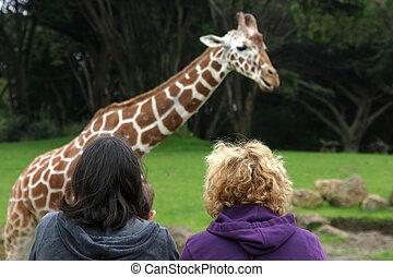 zoo, vista